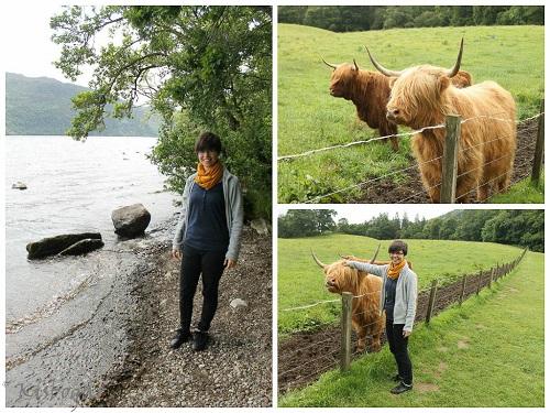 Hazafelé megnéztük a Loch Nesst, bár szörny sehol se volt, sütött a nap. Viszont simogattunk skót felföldi marhákat, akik nagyon lazák voltak. :)