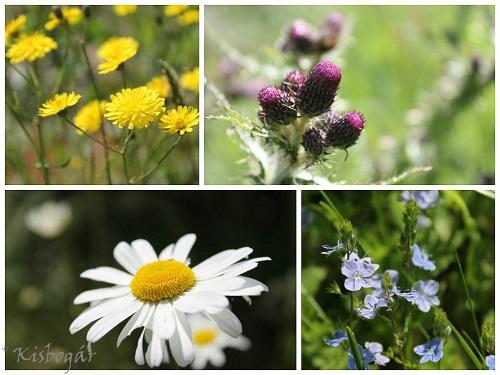 scotlandflowers-2